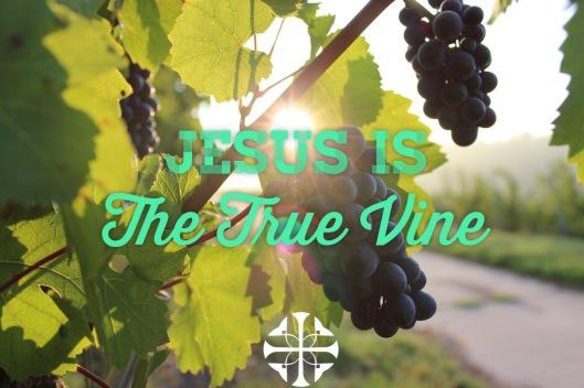 True Vine